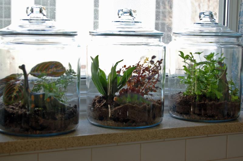 terrariums-decoration